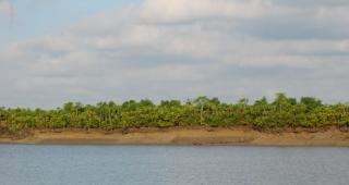 Mangrove forests in Sundarbans, Bangladesh. 2008. (Image: Sayamindu Dasgupta.)