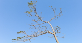A young tree in Saudi Arabia (Image: Francisco Anzola.)
