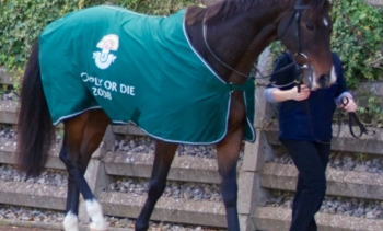 Comply or Die won the 2008 Grand National (Image: Dan Heap.)